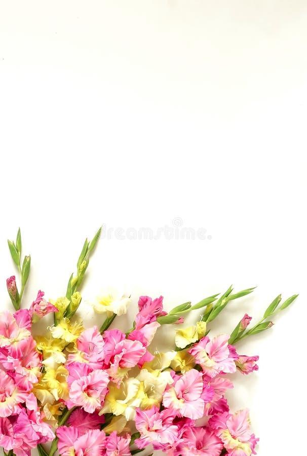 Marco de la frontera de las flores hecho de rosa y de gladiolos amarillos en el fondo blanco foto de archivo