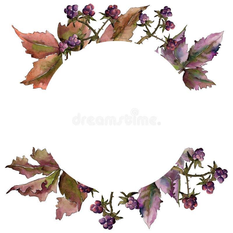 Marco de la hoja de Blackberry Follaje floral del jardín botánico de la planta de la hoja ilustración del vector