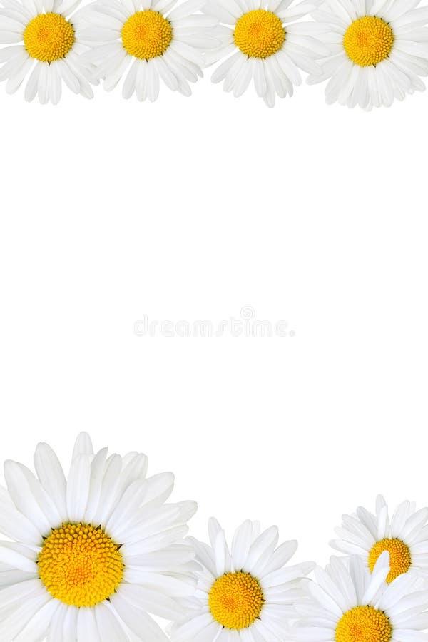 Marco de la margarita imagen de archivo. Imagen de copia - 2831621