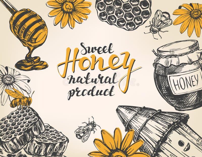 Marco de la miel Diseñe el conjunto de elementos Detallado grabado Bosquejo realista dibujado mano del ejemplo del vector del vin stock de ilustración