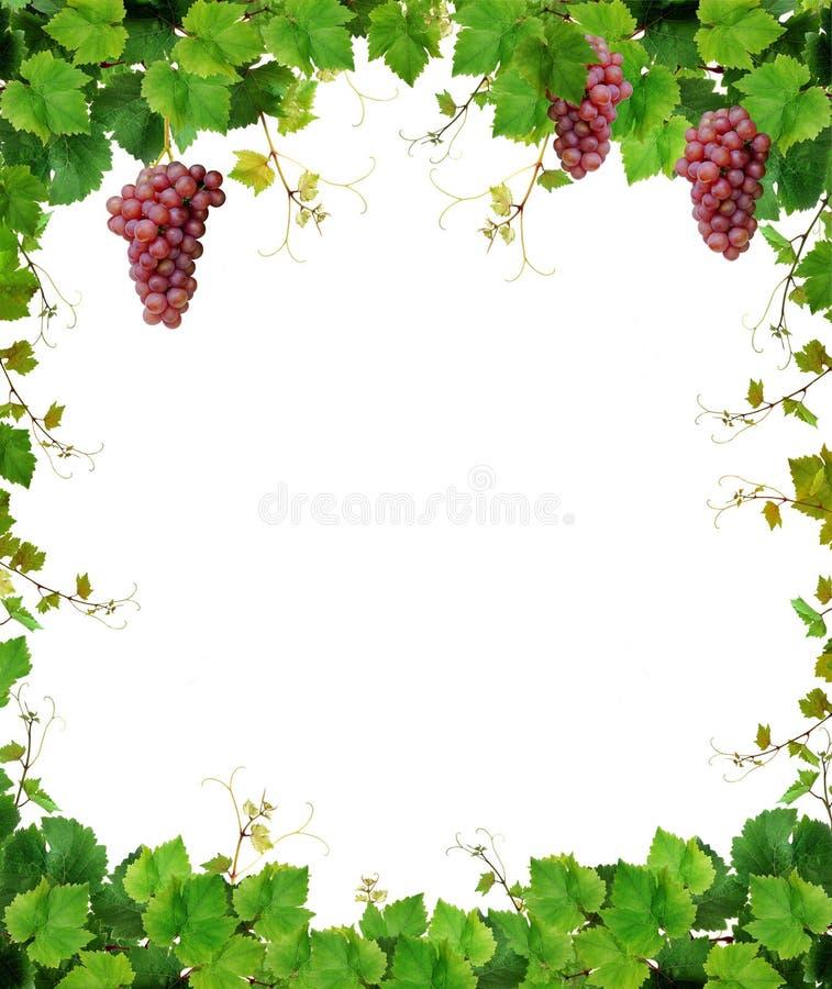 Marco de la vid con las uvas de vino
