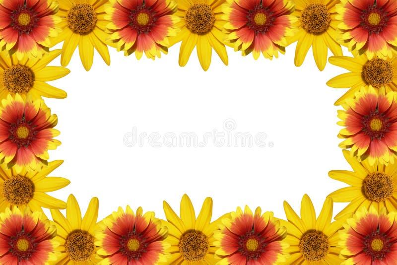Marco de las flores foto de archivo libre de regalías