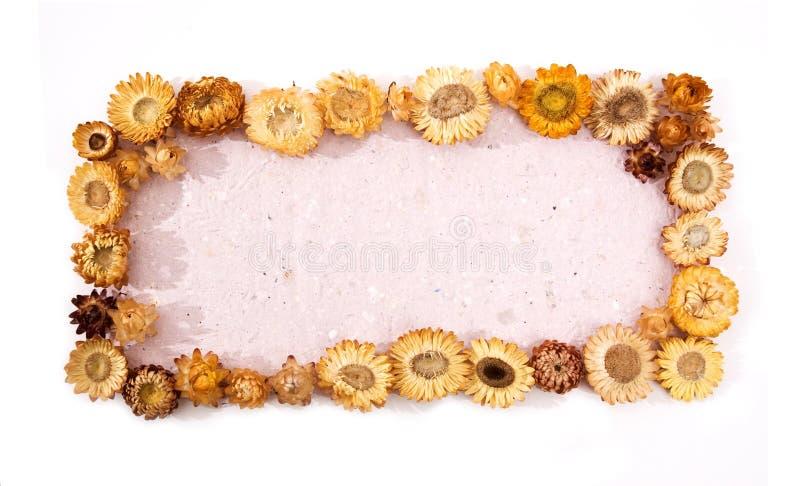 Marco de las flores imagen de archivo