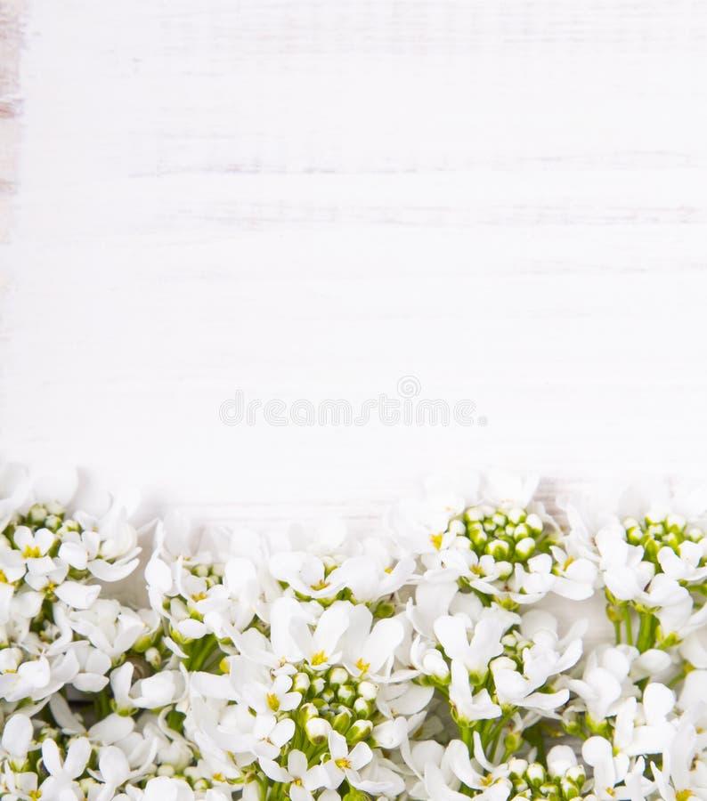 Marco De Las Flores Blancas En El Fondo De Madera Blanco Imagen de ...