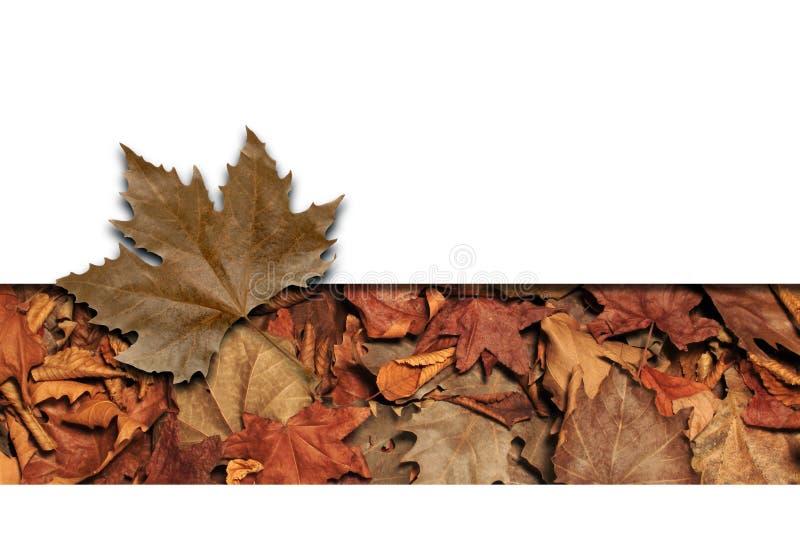 Marco de las hojas fotos de archivo