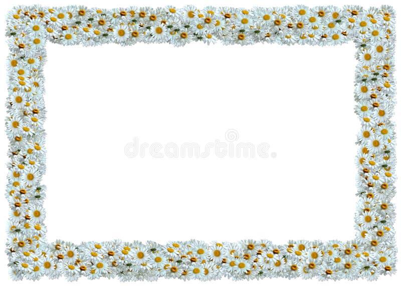 Marco de las margaritas blancas stock de ilustración