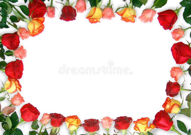 Marco de las rosas imágenes de archivo libres de regalías