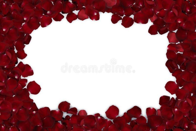 marco de los pétalos color de rosa rojos aislados fotografía de archivo