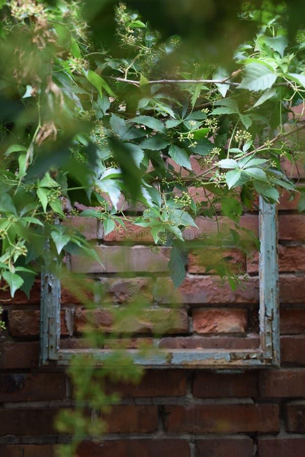 Marco de madera en una pared en el jardín fotos de archivo