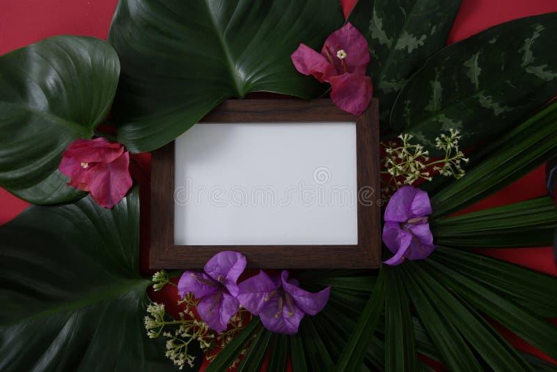 Marco de madera de la foto de la maqueta con el espacio para el texto o imagen en fondo rojo y hojas y flores tropicales fotografía de archivo