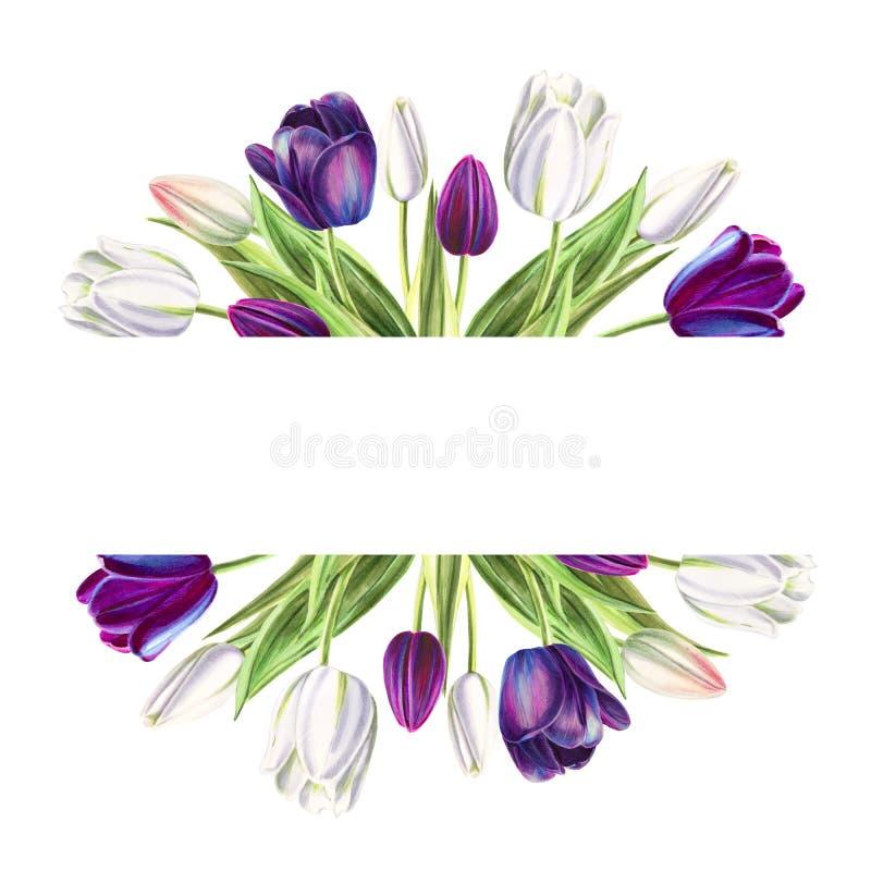 Marco de texto hermoso de los tulipanes blancos y negros Dibujo del marcador Pintura de la acuarela stock de ilustración