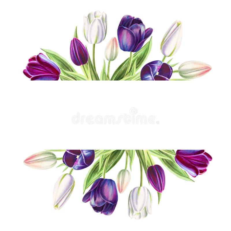 Marco de texto hermoso de los tulipanes blancos y negros Dibujo del marcador Pintura de la acuarela ilustración del vector