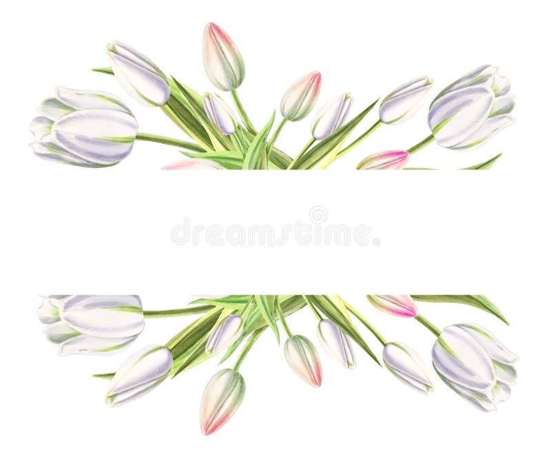 Marco de texto de tulipanes blancos hermosos Dibujo del marcador Pintura de la acuarela Copie el espacio fotografía de archivo libre de regalías
