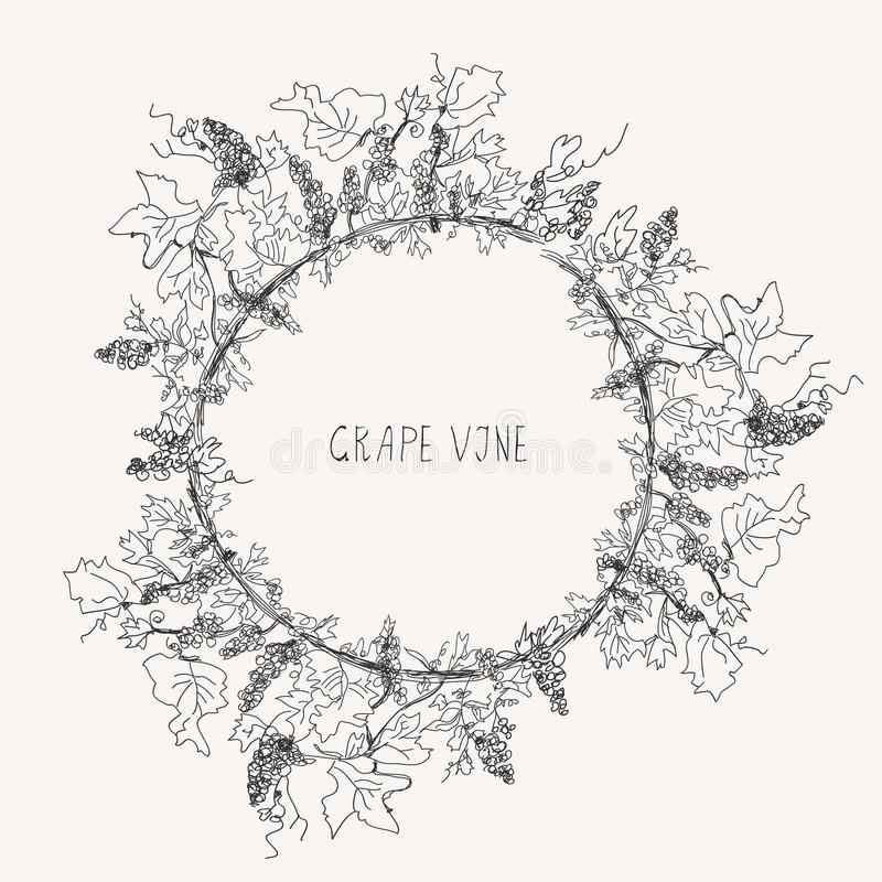 Marco del bosquejo de la vid de uva redondo ilustración del vector