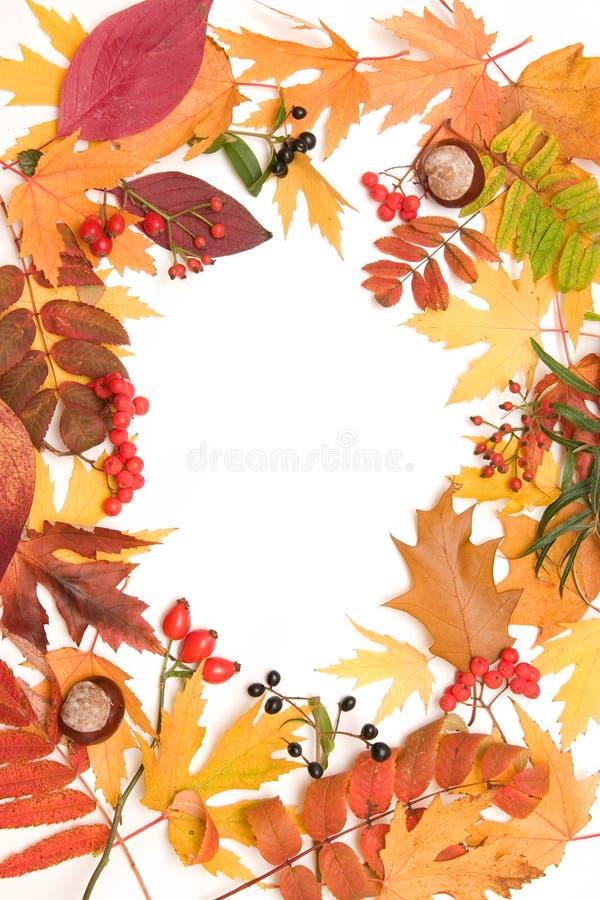 Marco del otoño imagen de archivo libre de regalías
