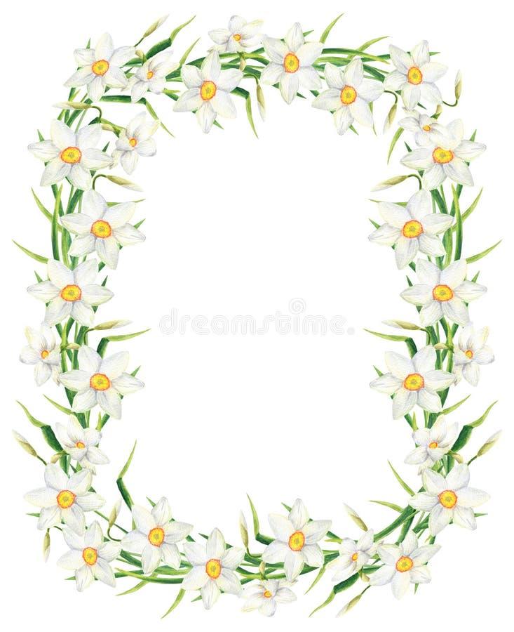 Marco del rectángulo de la flor del narciso de la acuarela Ejemplo exhausto de la guirnalda del narciso de la mano aislado en el  imagen de archivo libre de regalías
