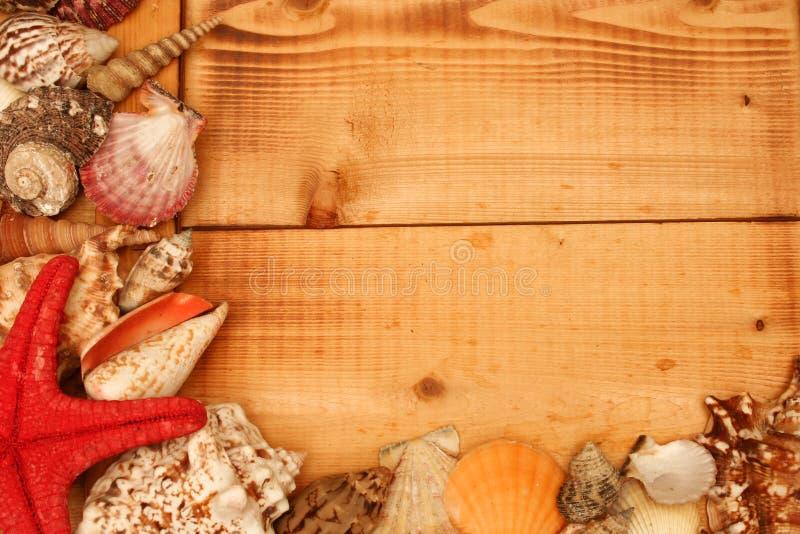 Marco del shell en la madera foto de archivo
