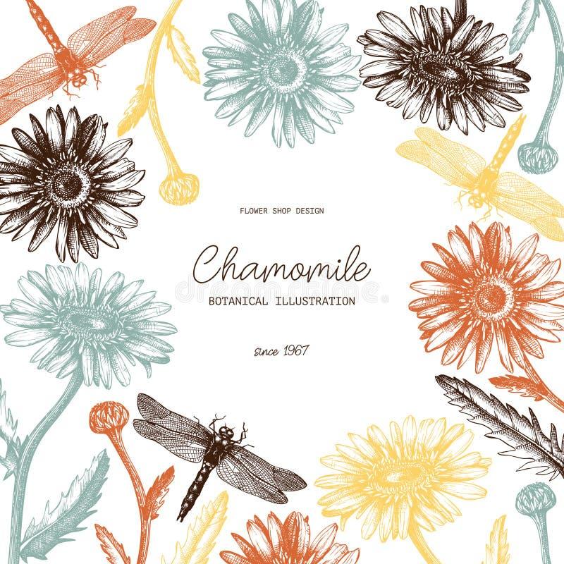 Marco del vector con las flores exhaustas y dragonly los bosquejos de la manzanilla de la mano Diseño de la tarjeta o de la invit stock de ilustración