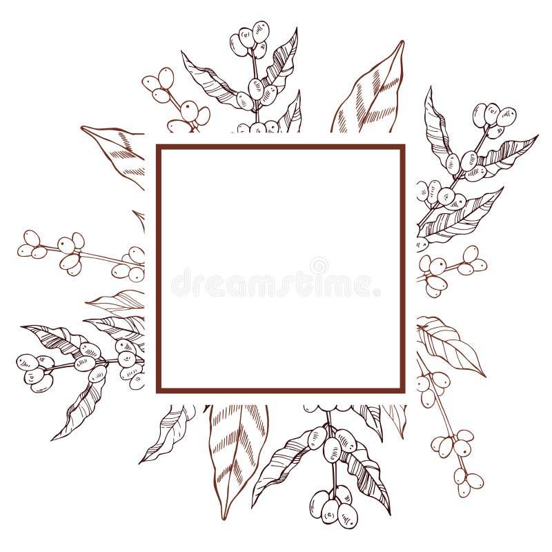 Marco del vector con las plantas dibujadas mano del café stock de ilustración