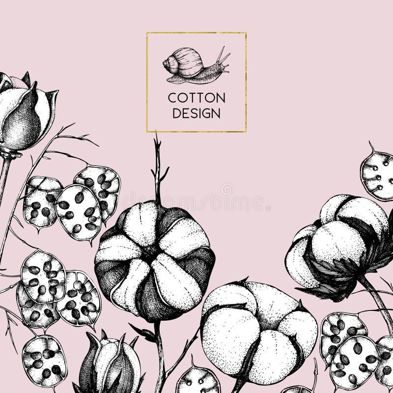 Marco del vector con las ramas exhaustas del algodón y de la honradez de la mano con los caracoles Ejemplo del vintage con los ej libre illustration