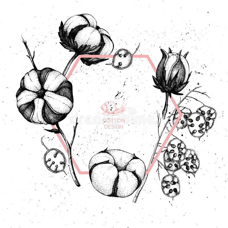 Marco del vector con las ramas exhaustas del algodón y de la honradez de la mano con los caracoles Ejemplo del vintage con los ej stock de ilustración