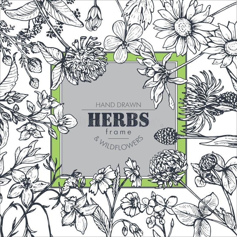 Marco del vector con los elementos de la hierba y del wildflower stock de ilustración