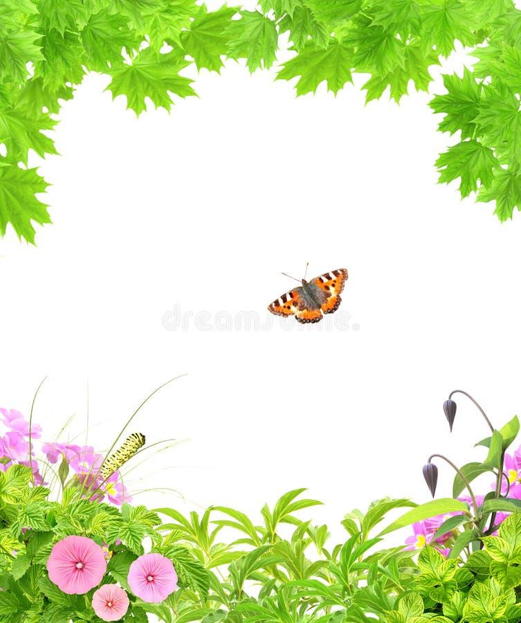 Marco del verano con las hojas de arce, las flores y los insectos verdes fotografía de archivo