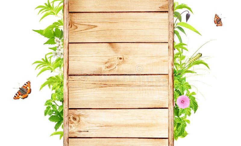 Marco del verano con las hojas, las flores y los insectos verdes fotos de archivo libres de regalías