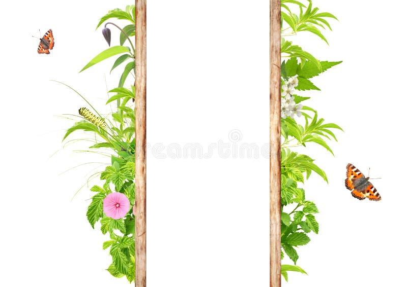 Marco del verano con las hojas, las flores y los insectos verdes imagen de archivo
