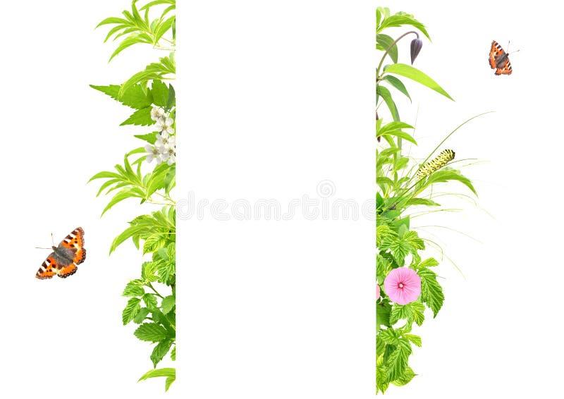 Marco del verano con las hojas, las flores y los insectos verdes imagenes de archivo