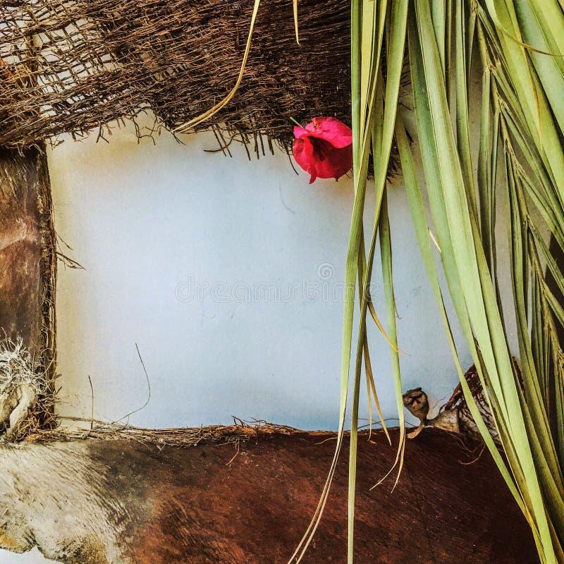 Marco del verano de hojas, de flores y de la corteza tropicales de una palmera imágenes de archivo libres de regalías
