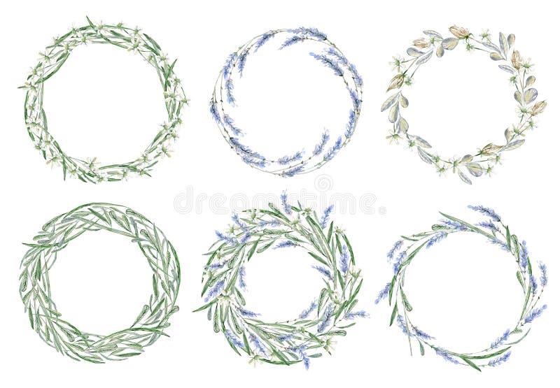 Marco dibujado mano de la acuarela Guirnalda tarjeta Flores, hierbas y le ilustración del vector