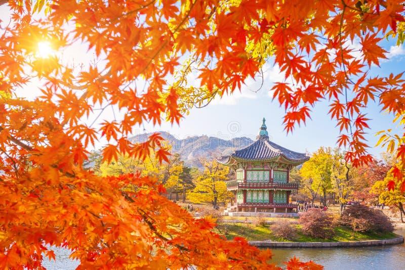 Marco do outono no palácio com folhas de bordo, Seoul de Gyeongbokgung fotos de stock royalty free