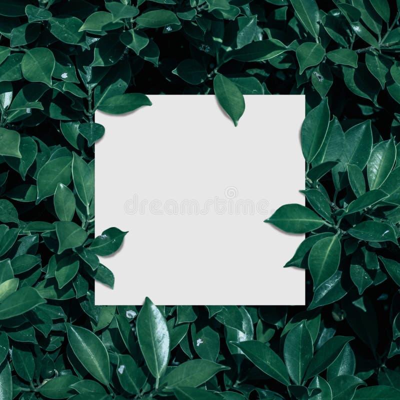 Marco, en blanco cuadrados para la tarjeta de publicidad o la invitación fotos de archivo libres de regalías