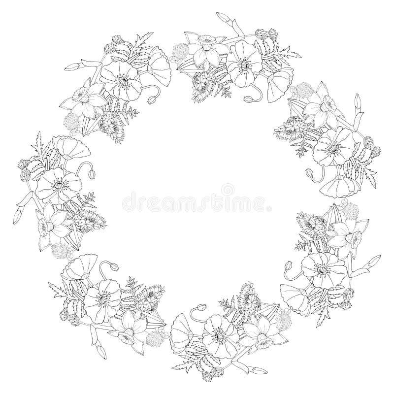 Marco floral con las flores y el narciso de la amapola, trébol y aciano en el fondo blanco libre illustration