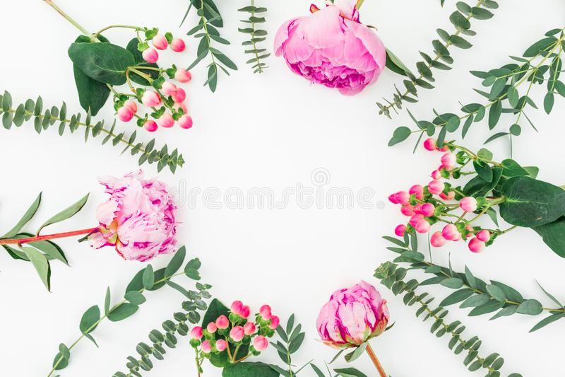 Marco floral con las peonías y las ramas rosadas del eucalipto en el fondo blanco Endecha plana libre illustration