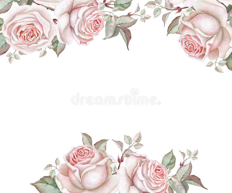 Marco floral de la acuarela con las rosas en blanco ilustración del vector