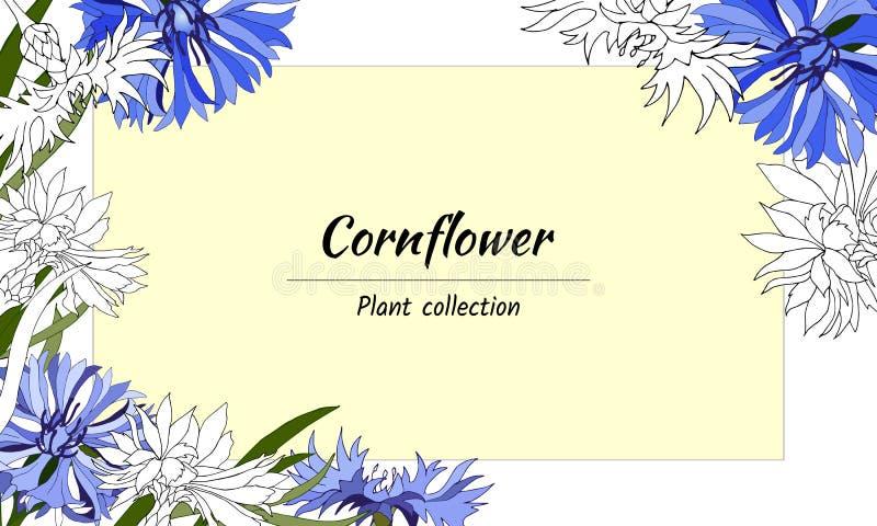Marco floral del contorno y de las flores azules de la primavera Para la decoración, tarjetas, saludos Ilustraci?n del vector libre illustration