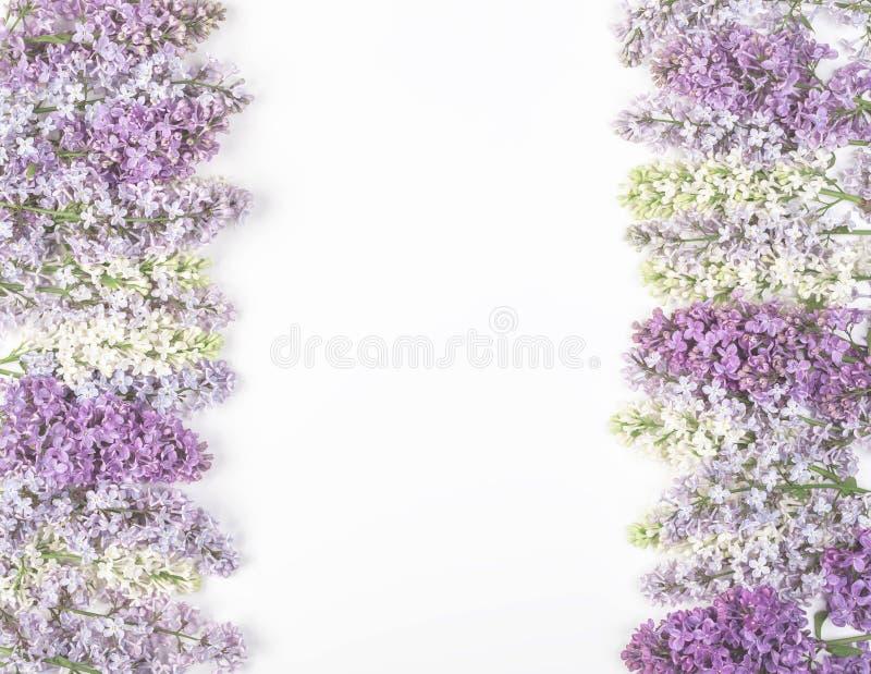 Marco floral hecho de las flores de la lila de la primavera aisladas en el fondo blanco Visión superior con el espacio de la copi fotos de archivo libres de regalías