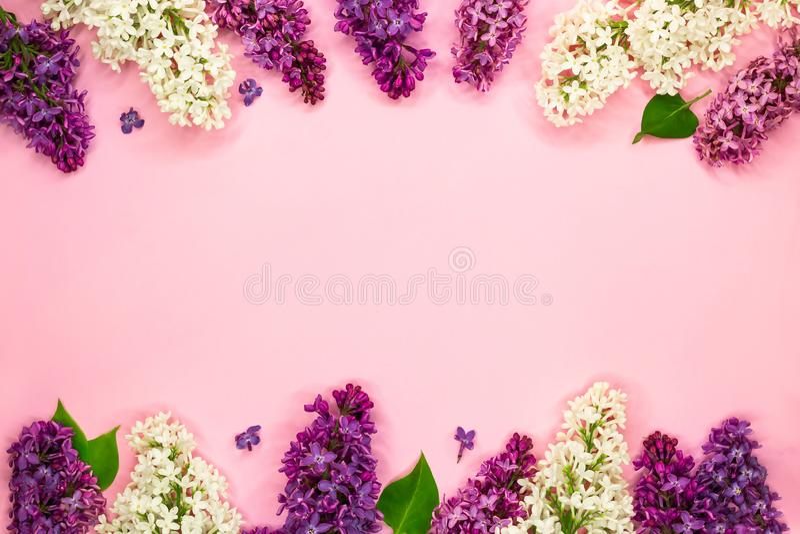 Marco floral hermoso de las flores blancas, púrpuras y violetas de la lila en fondo rosa claro Endecha plana Copie el espacio ver imágenes de archivo libres de regalías