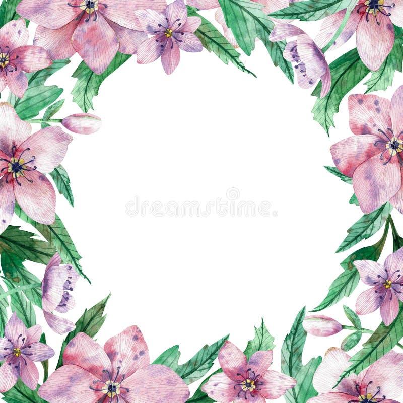 Marco floral rosado cuadrado de la acuarela con las flores y espacio blanco central de la copia para el texto La Navidad decorati imágenes de archivo libres de regalías
