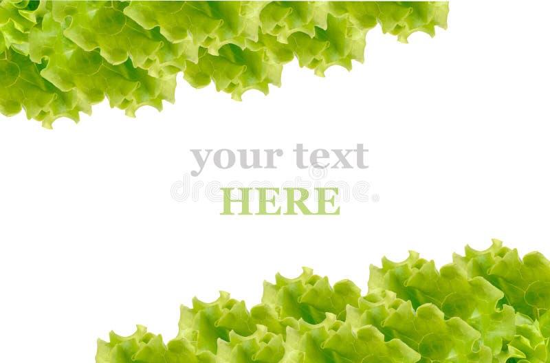 Marco fresco de la ensalada verde imagen de archivo libre de regalías