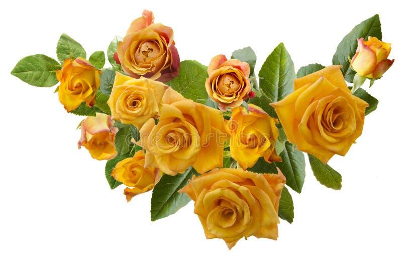 Marco hermoso con el ramo de rosas anaranjadas amarillentas aisladas en el fondo blanco fotografía de archivo libre de regalías