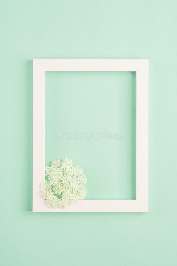 Marco hermoso de la flor blanca y de la foto en fondo en colores pastel de la menta imágenes de archivo libres de regalías