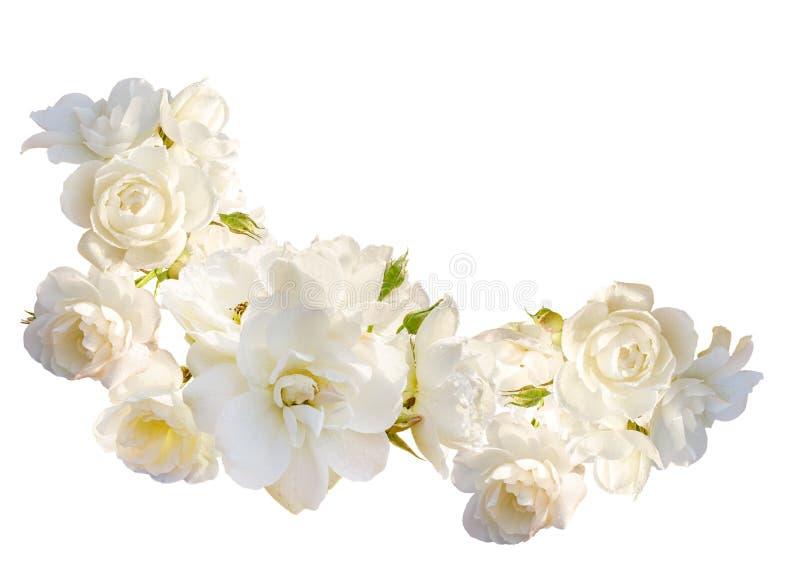 Marco horizontal hermoso con el ramo de rosas blancas con gotas de lluvia aisladas en el fondo blanco fotografía de archivo
