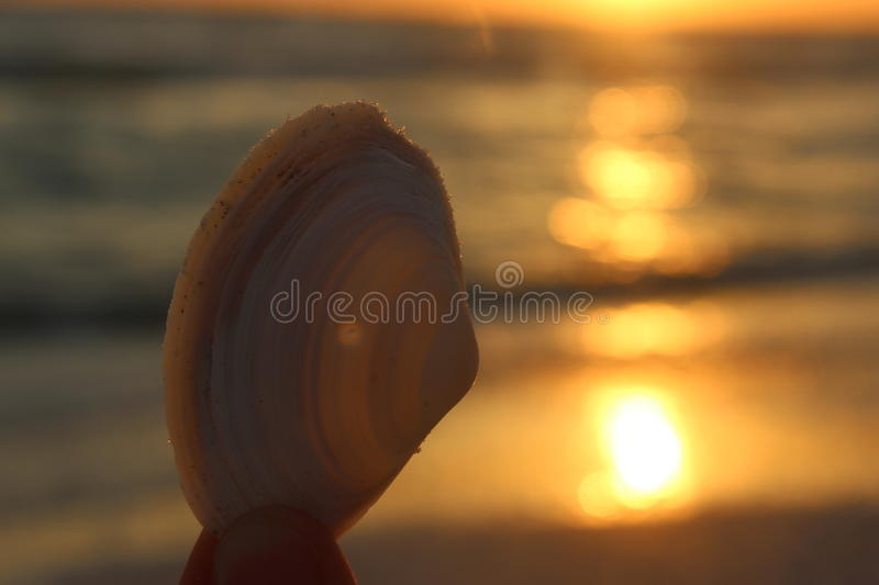 Marco Island Sunset. A photo taken of a beautiful sunset contrasted by a seashell in Marco Island, Florida royalty free stock photos