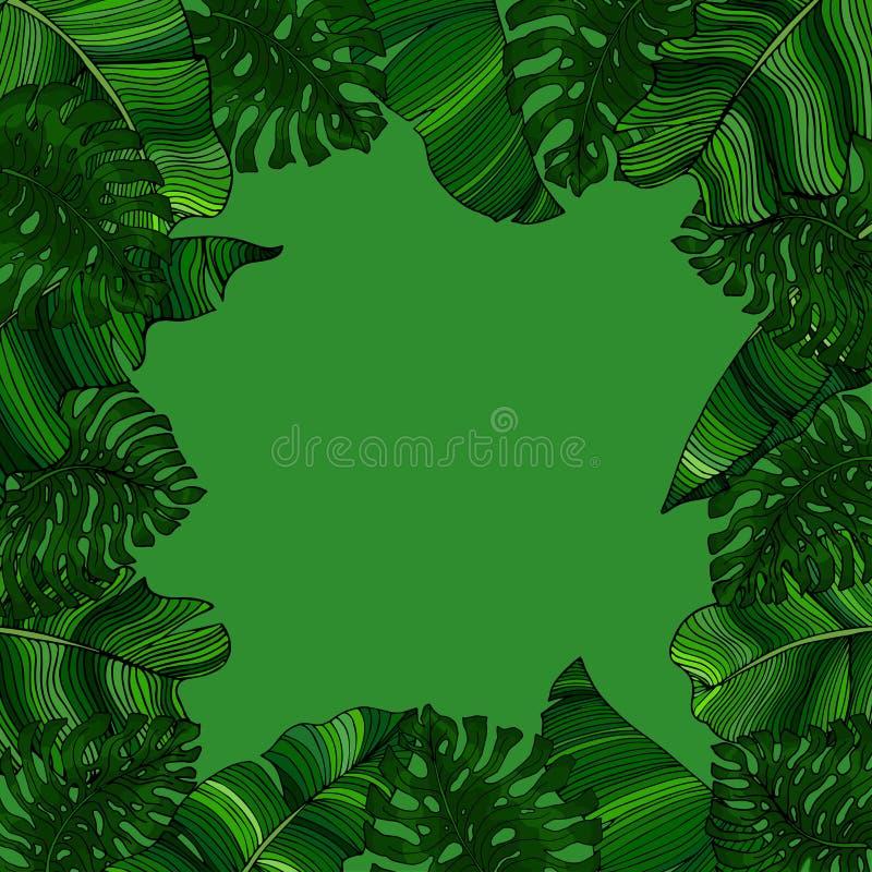 Marco natural para el texto de las hojas exóticas, verdes del monstera y de las hojas de un árbol de plátano Idea para el cartel, libre illustration