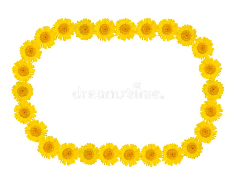 Marco oval de las flores amarillas brillantes del crisantemo en un fondo aislado blanco Humor del verano Espacio libre libre illustration