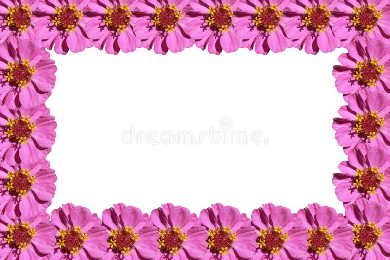 Marco púrpura de las flores fotografía de archivo