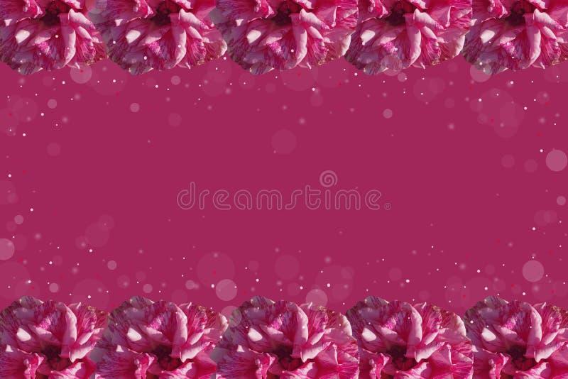 Marco púrpura de rosas foto de archivo